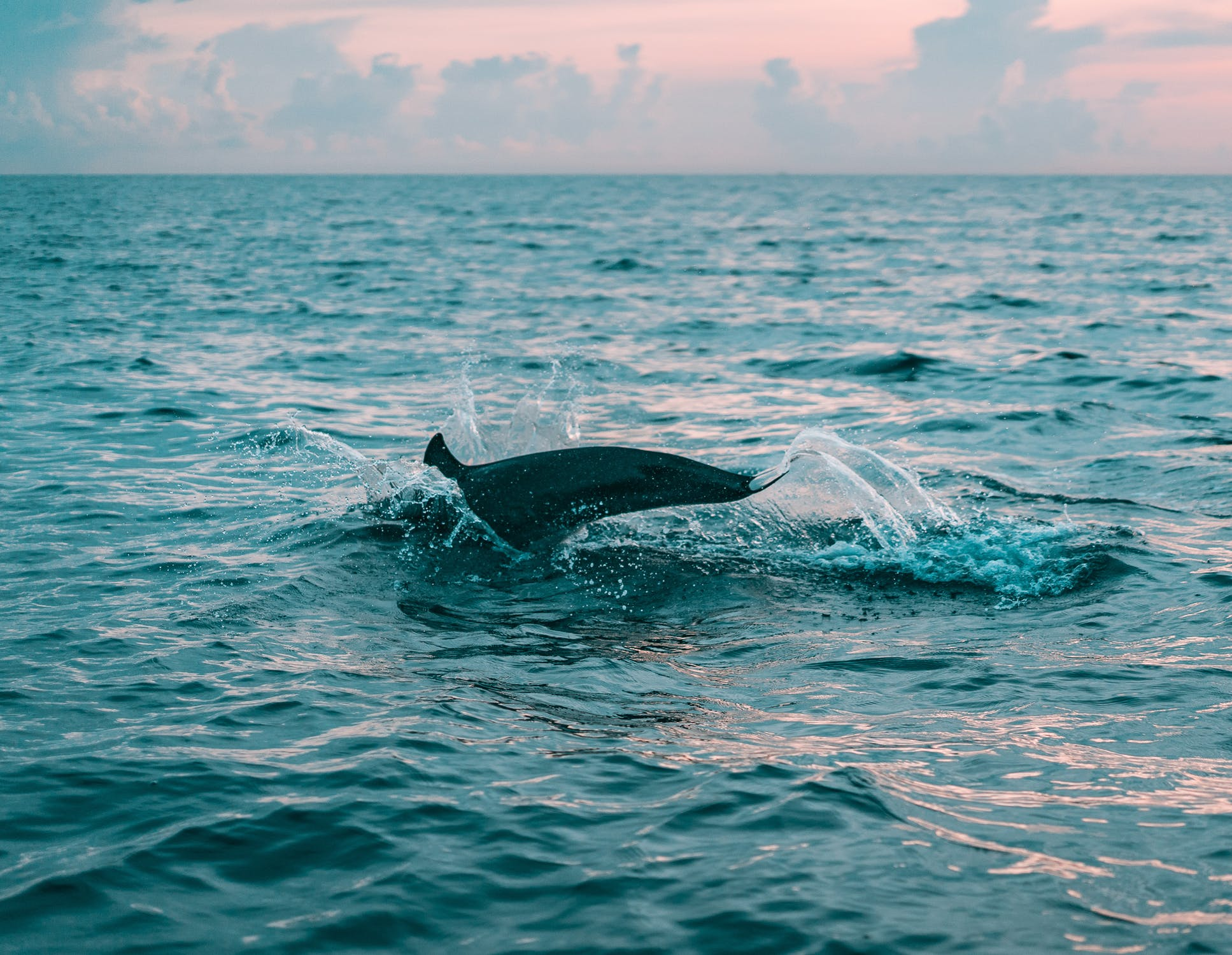 dolphins things to do stonehaven