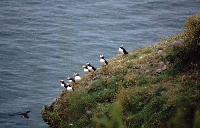 Nature things to do in stonehaven
