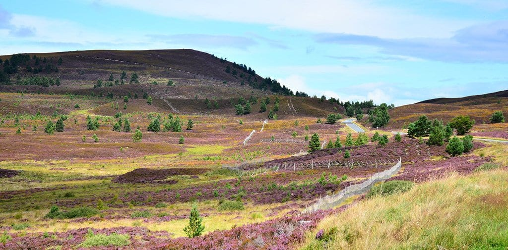 things to do in Pitlochry 10 - Heather Gems