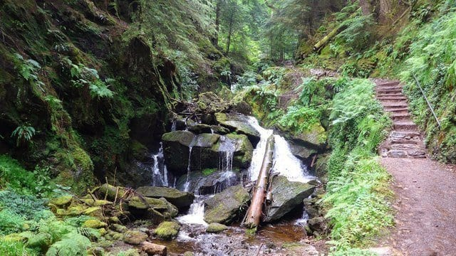 puck's glen is a fantastic thing to do in dunoon