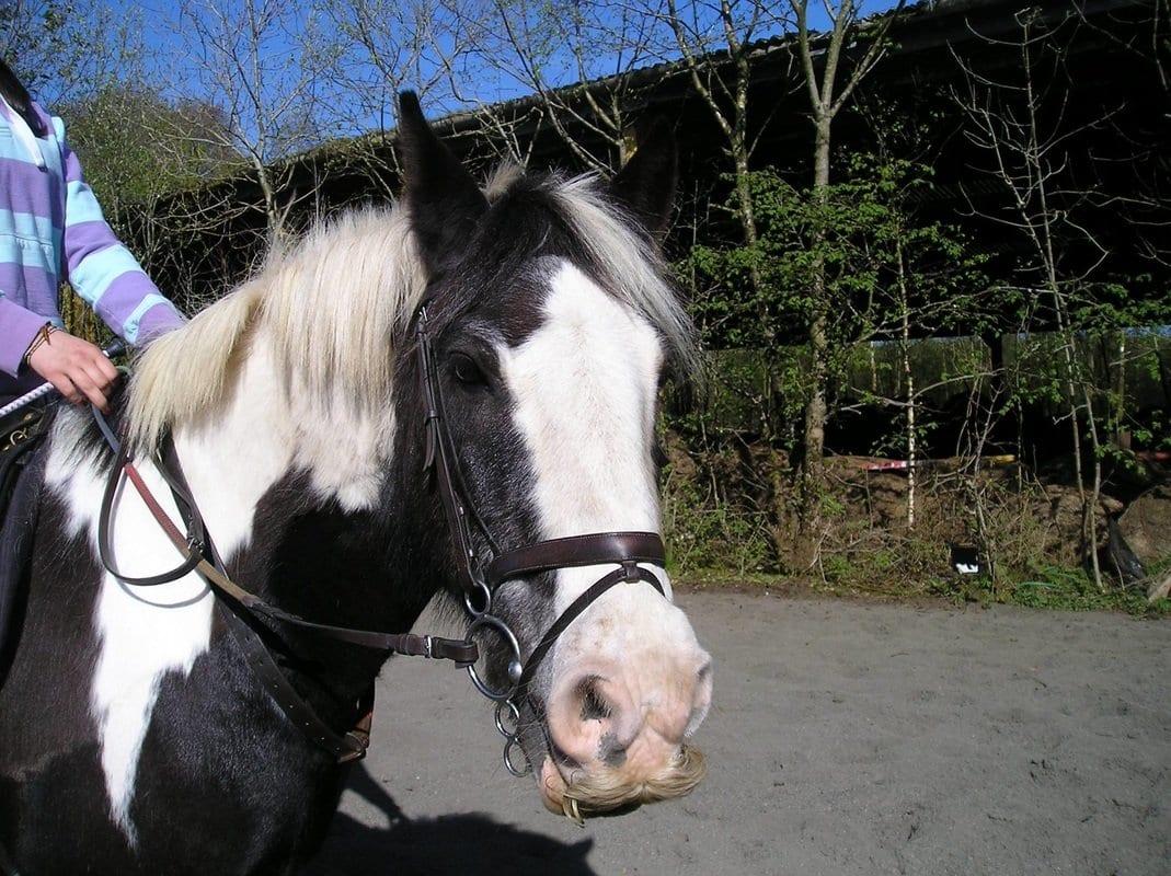 Lomondside Stud & Equestrian Centre